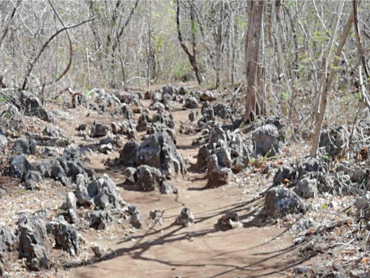 La piedra caliza, característica del lugar inmersas en parte de algunos tramos del sendero Los Laurales, antes de llegar al mirador. Crédito de foto: Periódico Mensaje.